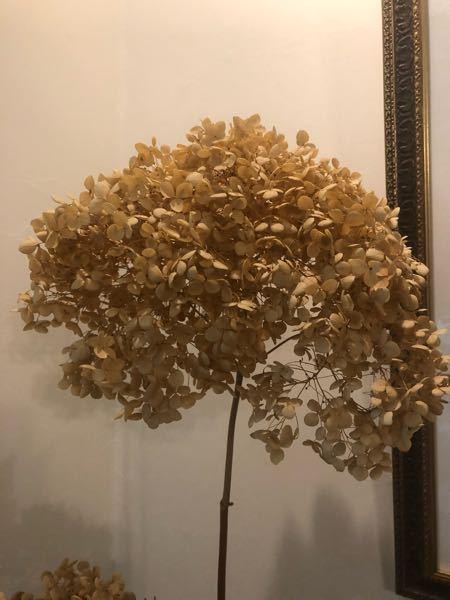 この植物は何という名前でしょうか? ドライフラワーで買いました。 どなたか教えてください。 お願いします。