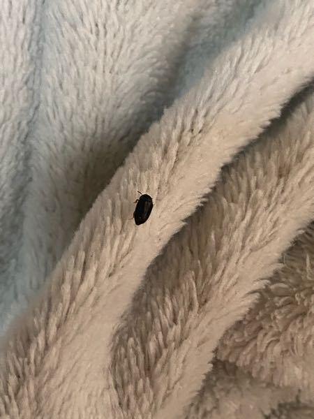 家の中で度々この虫を見かけるのですが、なんという虫でしょうか。わかる方教えていただきたいです。