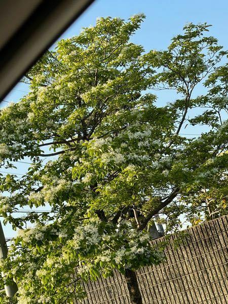 この木なんて木ですか?