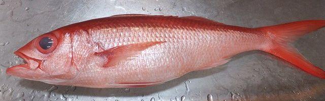 沖縄県在住の方にお伺いをいたします。 ・ 沖縄県の人は、アカマチ(ハマダイ)はどのように調理をして食べるのが一般的なのでしょうか。 煮魚でしょうか。 それとも焼き魚でしょうか。 あるいは刺身なの...