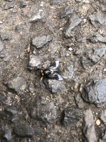 この虫は、なんですか? 顔の周りをウロウロしてきて怖かったのです。