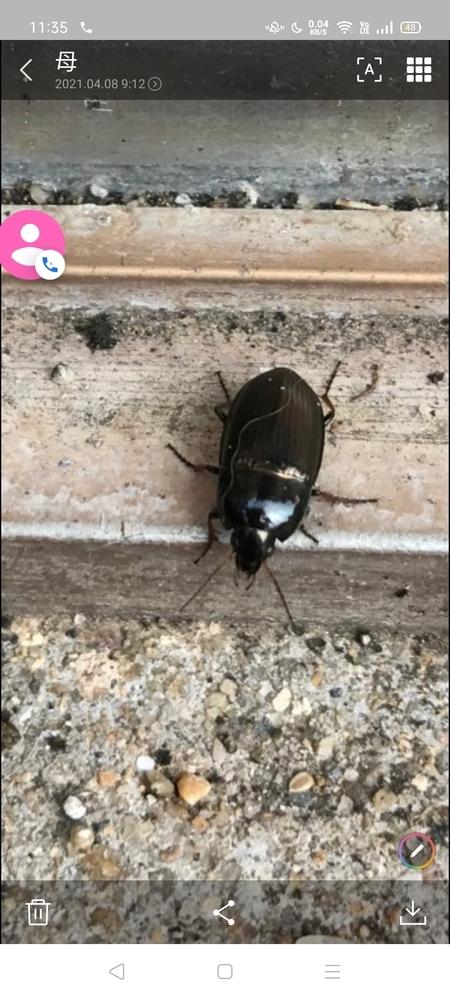 この虫何でしょうか?ダンゴムシより小さく壁、土の周り大量発生しているような感じです。