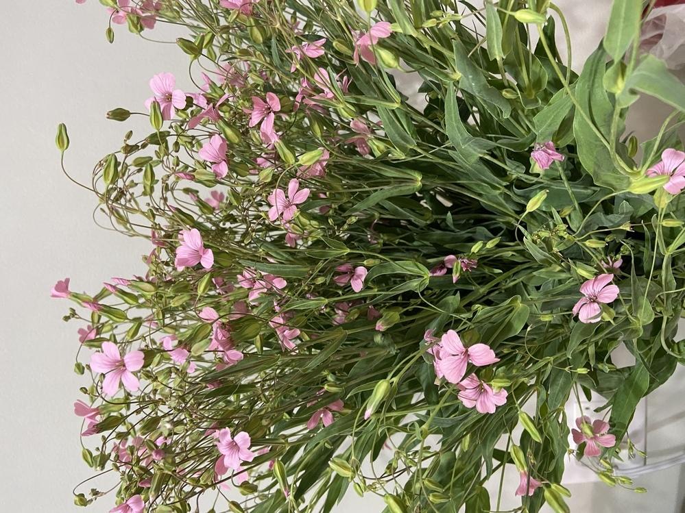 この花の名前を教えてもらたいです。お願いします。