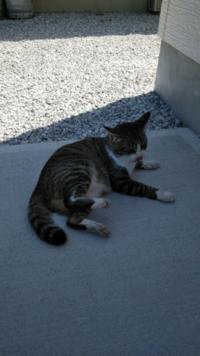 このネコは、安心感はありますか