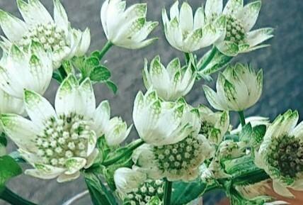 これは何という花ですか?