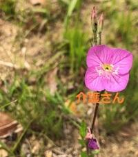 この植物(花)の名前は何ですか?  撮影場所は兵庫県で撮影日は2021年4月20日です。  よろしくお願いします。