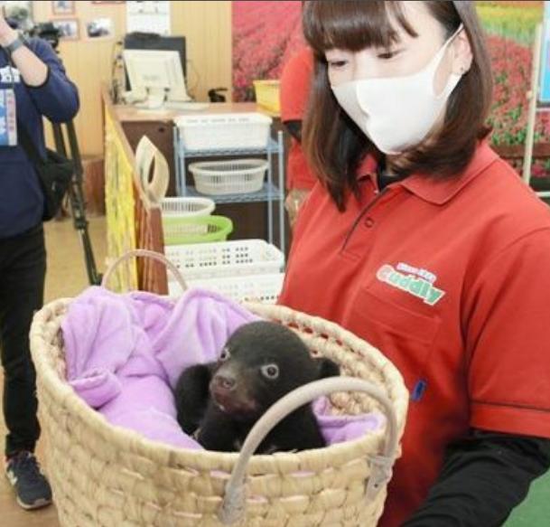赤ちゃんグマ「かわいい」 阿蘇カドリー・ドミニオンでお披露目 熊は人に懐くものですか? 赤ちゃんと言っても危険ではないのですか?