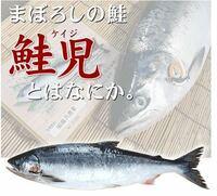 鮭児 - 数万匹に1匹しか獲れないのはなぜですか?