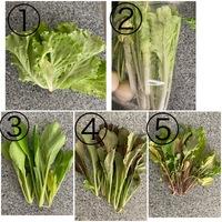 野菜の名前を教えてください。 葉野菜をいただきました。 何の種類の野菜なのかわからず、料理に使えません。 画像の5種類の野菜の名前を教えてください。 宜しくお願いいたします。