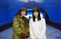 ドラマ「ネメシス」であの広瀬すずちゃんと橋本環奈ちゃんの美人コンビが共演しましたがここにもう1人入れるなら誰がいいですか?
