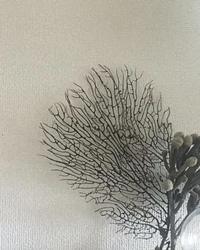 こちらのインテリア画像の枝?(ドライ?)何の種類か教えて下さい。