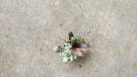 この貝は何という貝ですか? 食べられますか?