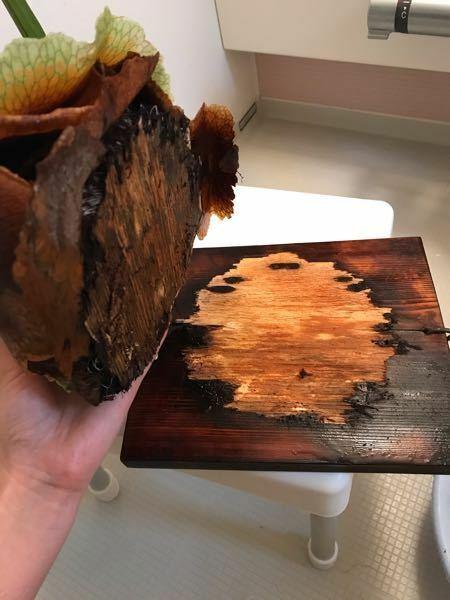 コウモリラン板付きが浴槽の水に入れていたところ、取れてしまいました。 どのように板に戻せば良いのでしょうか? もうこの板は使えないのでしょうか? このコウモリランは、お店で買ってから、もう4年ぐらいは立っていると思います。 何回もこの方法で水を与えていました。