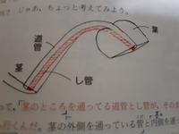 茎の道管と、し管の位置について不明点があります。 次の画像の道管と、し管の関係がよく分かりません。 茎では、し管が外側、道管は内側を通る、と学んだのですが、次の画像の茎ではそうなっていますか? 道管の位置の矢印も、茎の部分全体を指している気がしてどうなってるかが分かりません。 分かりやすい解説をお願いします。