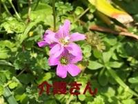 この花の名前は何ですか?  撮影場所は兵庫県で撮影日時は2021年4月20日です。  よろしくお願いします。