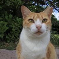 猫の耳の先をハサミでちょん切るのは、猫にとっては痛いのでしょうか? 野良猫で耳の先が斬られる猫をよく見ますが、あれって猫にとっては痛いのでしょうか?