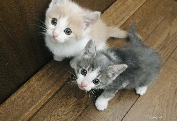 おはようございます とても可愛い2匹の仔猫 皆さんが お友達になりたいのは どちらの子ですか??