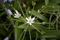 ③植物園で見たお花です。  花火みたいなお花 名前を教えて下さい。 宜しくお願いします。