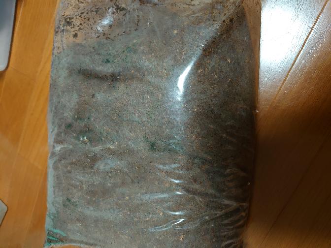 青カビが生えた昆虫マットは使用できますか? 昨年購入したマット(昨年12月)です。 室内の日の当たらない寒い場所に保管してあった未開封のものです。 今までこのようなことはなく、ネットで初めて購入したショップ?の物です。 詳しい方、アドバイスお願いいたします。