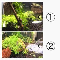 水草の種類について詳しい方教えていただけますか。 【写真2枚あり】 パールグラス系?の種から育てていて、 最初は、思い描いていた、よく見る小さい葉(①写真)で綺麗だったのですが、いつの間にか葉が横に伸びて(②写真)いました。(co2なし) ネットで調べても同じ種類がヒットしません。  詳しい方種類を教えていただけますか。 ご回答よろしくお願いいたします。