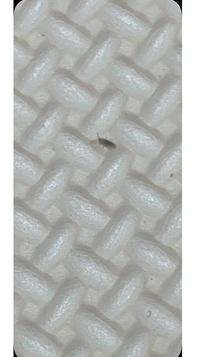 この虫は何という虫でしょうか? 1ミリも満たない大きさで、たまにノミのようにとびます。トビムシでしょうか? 画像が荒くて申し訳ないですが、分かる方お願い致します。