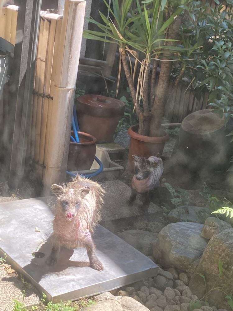 この動物はなんでしょうか? さっき庭にいました。 中野区です。 危険と恐怖を感じました。