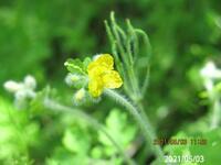 花の名前を教えてください、 岐阜県美濃加茂市杁ヶ洞池で、 撮影20210503