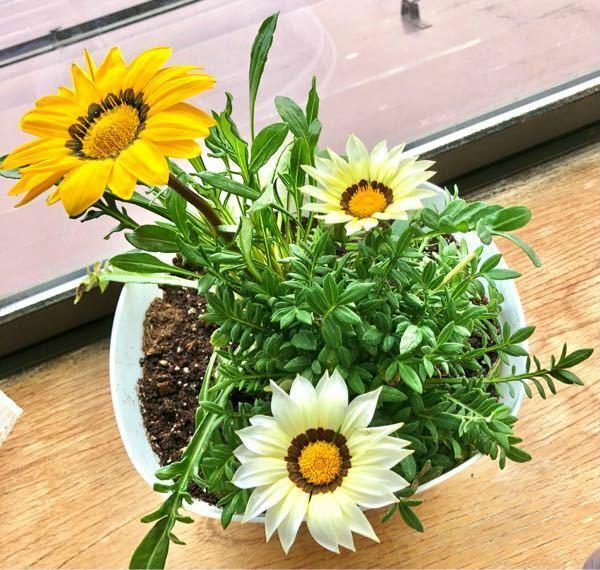 これはなんの花でしょうか。 苗を買う時に見た目だけで買って、名前を見るのを忘れてしまいました。