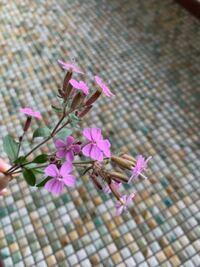 この花は何という花ですか? 雑草ですか?