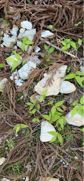この岩石の種類を知りたいです 補足 石同士ぶつけたら割れる?欠ける!ヒビが有ればてでも割けます