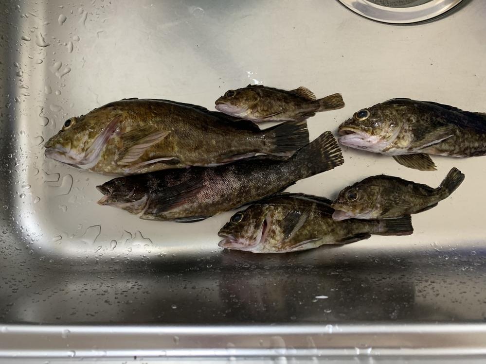 画像の魚を頂いたのですが、種類がわかりません。 丸っこいのがカサゴで1匹種類が、違う細長い魚はアイナメという魚でしょうか? また、食べれますか?