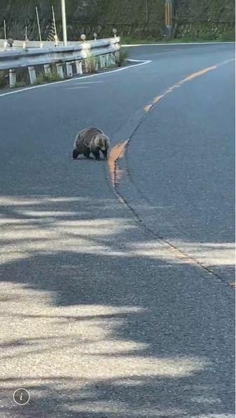 この動物は何でしょうか? 教えて下さい、よろしくお願いします。