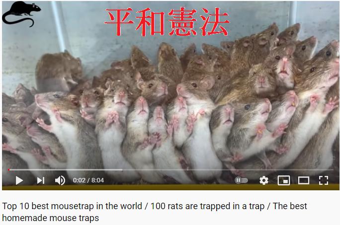平和憲法とネズミ このネズミ達は日本人に似ていませんか? 「平和」という餌に釣られて、罠に捕まってないですか? _____________ https://www.youtube.com/watch?v=KQdMltoZ8zw&t=21s Top 10 best mousetrap in the world / 100 rats are trapped in a trap / Th...