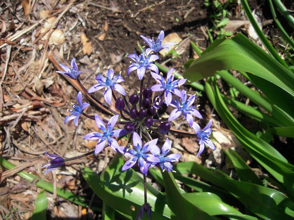 植物に詳しい方に質問させていただきます。こちらの紫色の花は 何という名前の花ですか? よろしくお願いいたします。