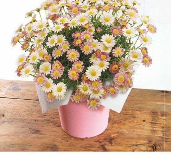 こんにちは 趣味で園芸を始めたものです マーガレットについてなんですけど 画像のように丸くならなくて… 私の育ててるマーガレットはまっすぐで 4つしかお花がついてなくて… また土はどのようなものを使えばいいですか? なんにも知らなくてすいませんm(*_ _)m 一応YouTubeとかでは見たのですが、