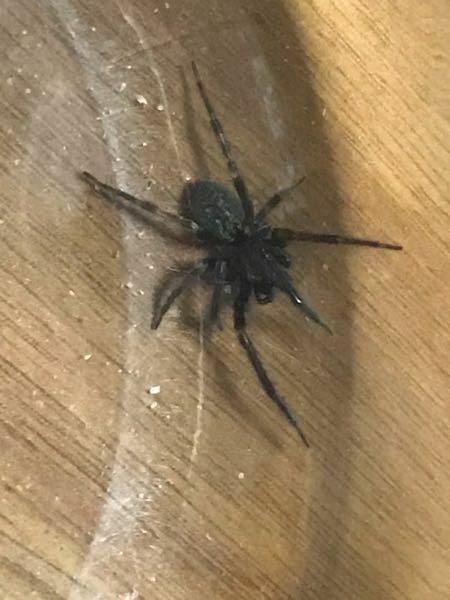 この蜘蛛の種類はなんですか? 大きさは10円玉ぐらいです。