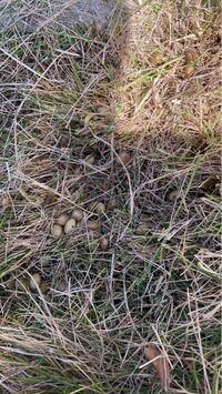 庭に卵が大量にありました。 なんの卵かわかる方教えて下さい。