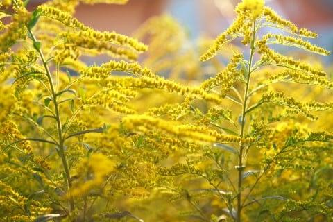 秋になったら辺り一面に咲く、この花の名前をおしえてください!