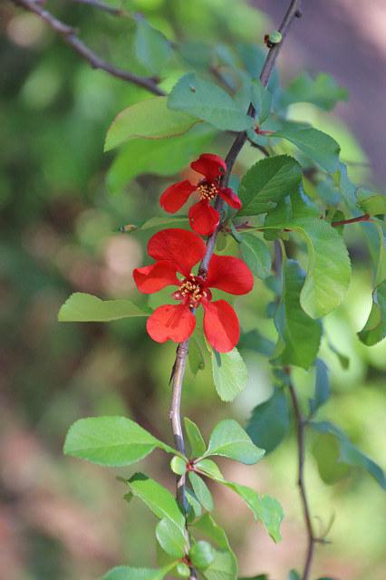 植物です。 名前が解りません。 教えてください。