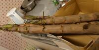 こちらのタケノコを頂いたのですが、これは破竹というタケノコでしょうか。 また、アク抜きしなくても食べられるよと言われたのですが、アク抜きは本当にしなくてもいいのでしょうか。 あと、今日中に下処理しないとまずいでしょうか。いつ収穫したのか分かりません。 質問が多くて申し訳ないですが、よろしくお願いします。