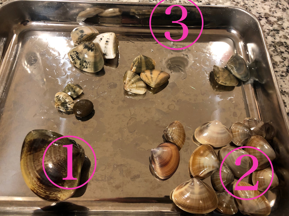 この貝たちの名前分かりますか?