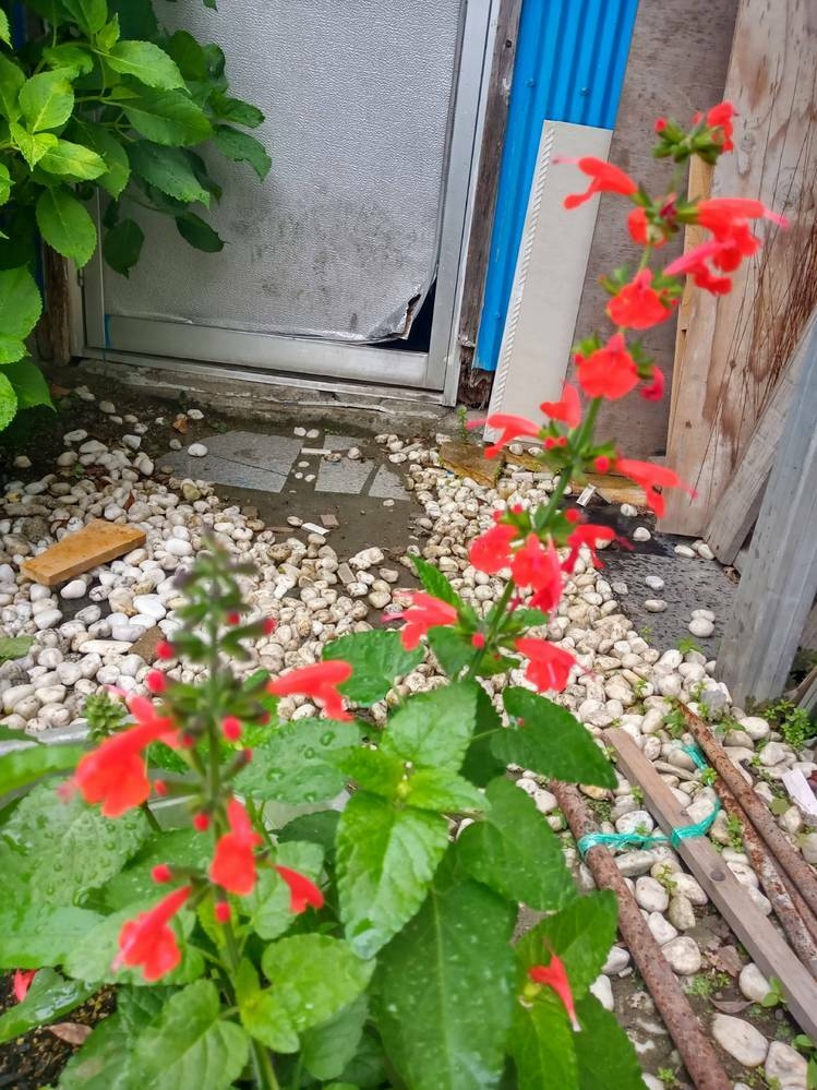 こちら花の名前わかりませんでしょうか。育て方を調べたいのですが名前がわかりません、宜しくお願い致します