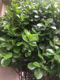 この植物は何でしょう わかる方教えて下さい。
