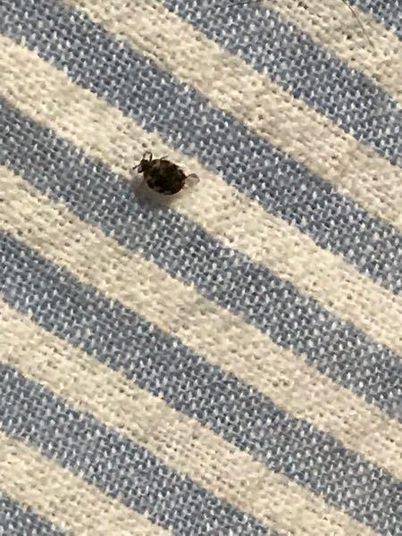 これ、なんていう虫か分かります?