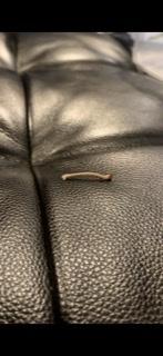この芋虫は何の幼虫ですか?