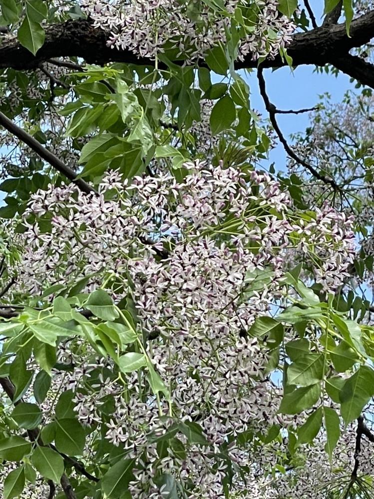 この花木の種名を教えてください。 撮影場所は九州です。 よろしくお願いします。