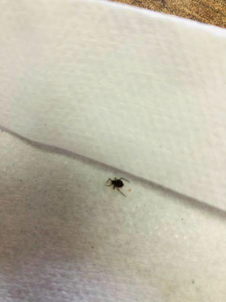 この虫はなんですか?? くもみたいな動きなんですが、、 ダニでしょうか??