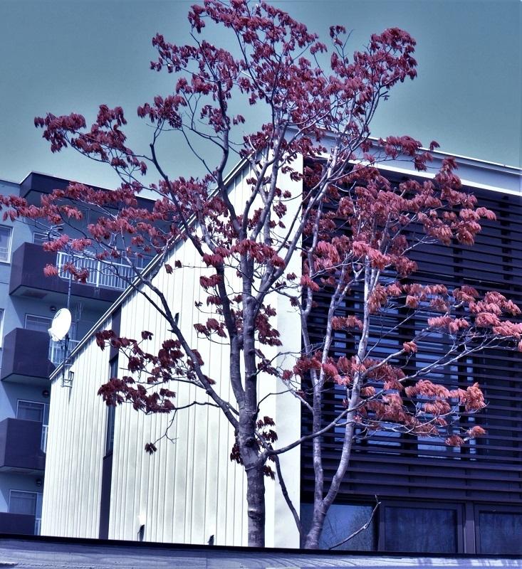 この樹の名前を教えて下さい。 茶色いのは花なんですか?