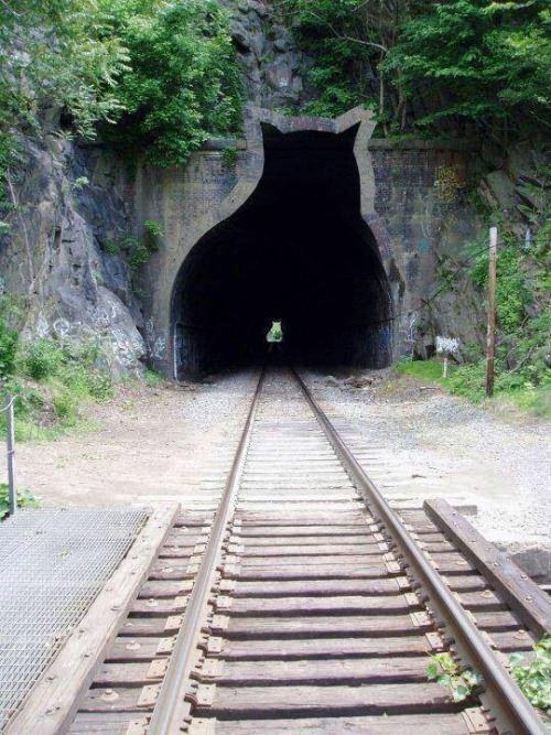 ネコの形をしたトンネルの写真を見ました。何県にあるのでかご存じの方は教えて下さい。