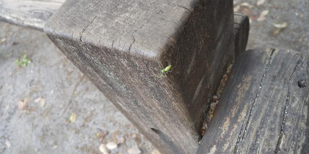 これは何と言う名前の蜘蛛かわかりますか? 見た感じ大丈夫そうなのですが、子どもが刺された気がすると心配しています。 ご存知でしたらよろしくお願いします。